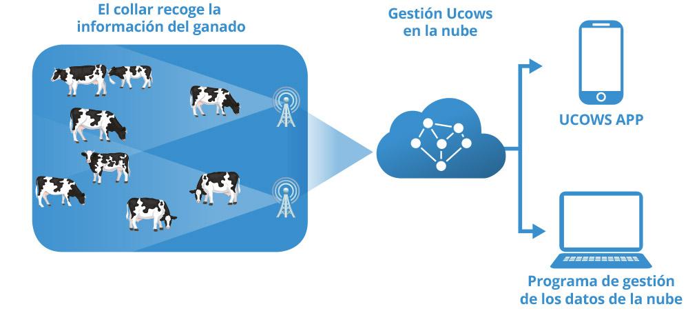 esquema_Ucows